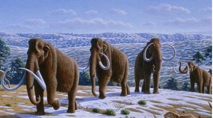 已经灭绝的动物及其简介
