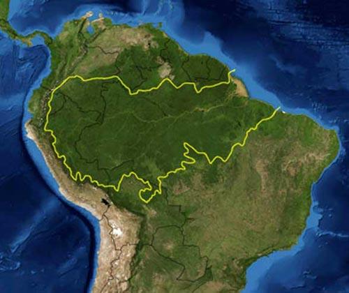 新研究称亚马逊森林采伐致微生物多样性丧失