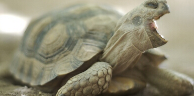 佛州少女残忍折磨乌龟致死 386