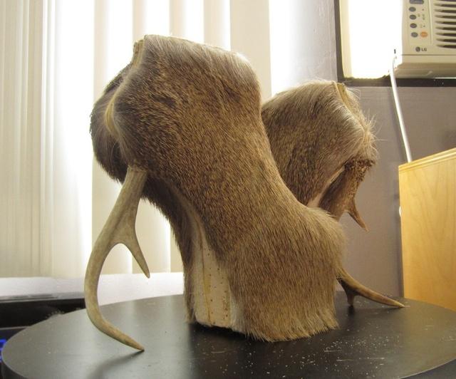 下面为你盘点11种动物形状的鞋子