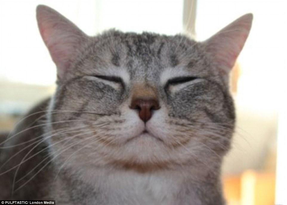 谁说动物不会微笑?狗狗小猫甚至蜥蜴微笑照片集合