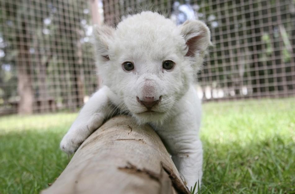 所有动物小时候都萌萌的 最萌动物婴儿照大盘点
