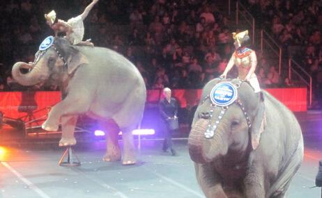 世界闻名马戏团取消大象表演