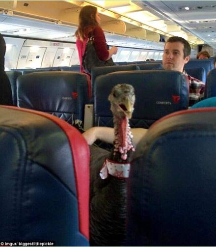"""航空公司有规定,乘客允许带着""""情感支持""""宠物乘坐飞机."""